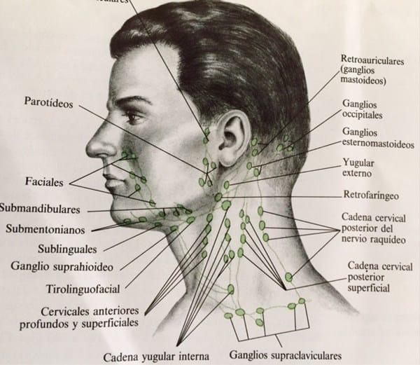 bulto debajo de la mandibula con dolor