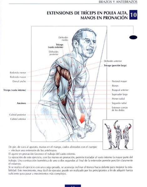 ejercicios de triceps con mancuernas
