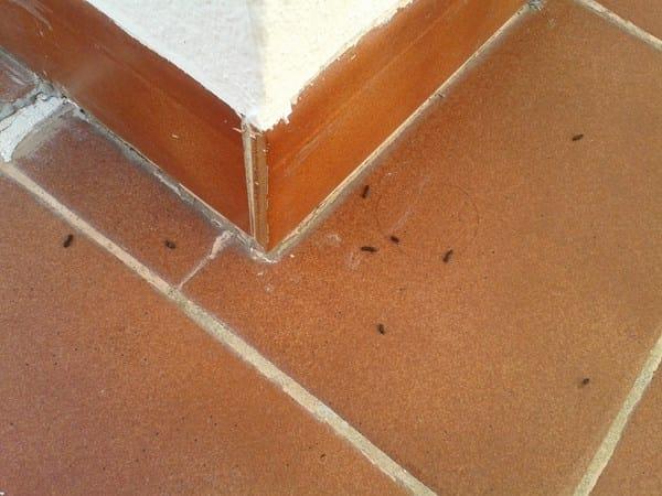 Creo tener ratas en mi terraza alba iler a for Ahuyentar ratas jardin