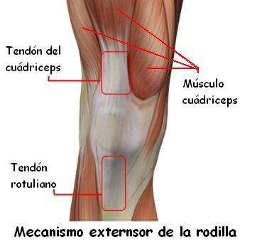 Se puede anchar la cadera en hombres - Huesos y articulaciones ...