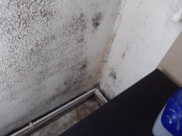 Moho y manchas negras en paredes alba iler a for Manchas en la pared